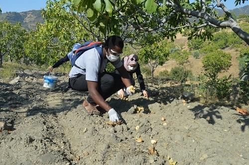 Yabancı öğrenciler ilk kez incir hasadı yaptı 14