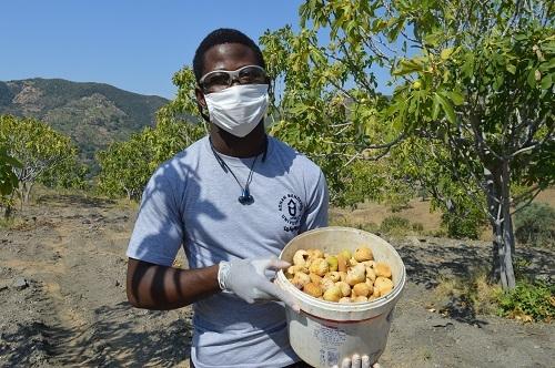 Yabancı öğrenciler ilk kez incir hasadı yaptı 3