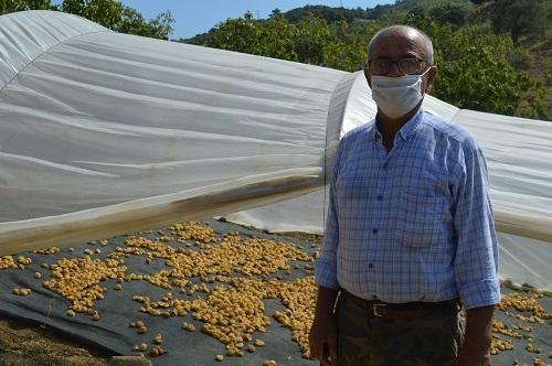 Yabancı öğrenciler ilk kez incir hasadı yaptı 4