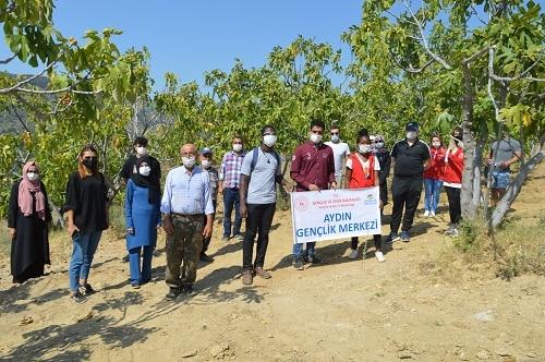 Yabancı öğrenciler ilk kez incir hasadı yaptı 5