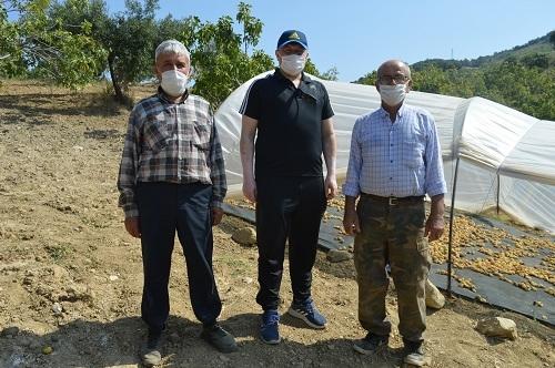 Yabancı öğrenciler ilk kez incir hasadı yaptı 8