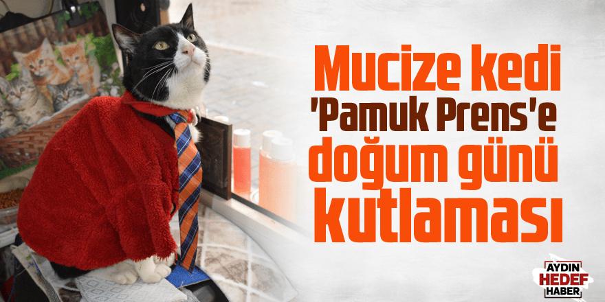 Mucize kedi 'Pamuk Prens'e doğum günü kutlaması