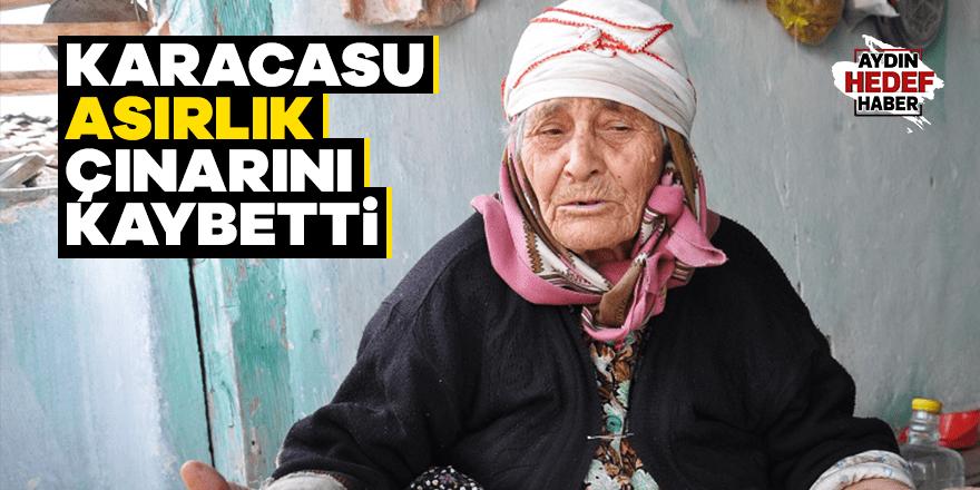 Karacasu asırlık çınarını kaybetti