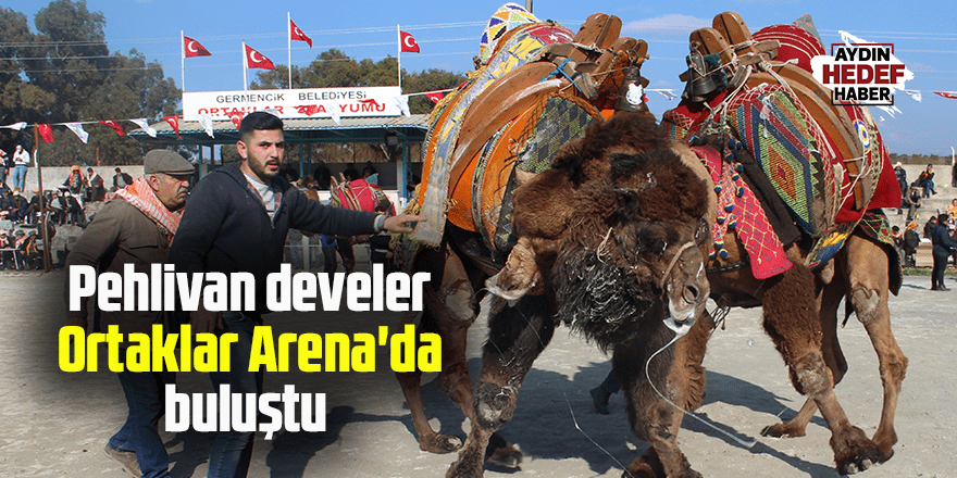 Pehlivan develer Ortaklar Arena'da buluştu