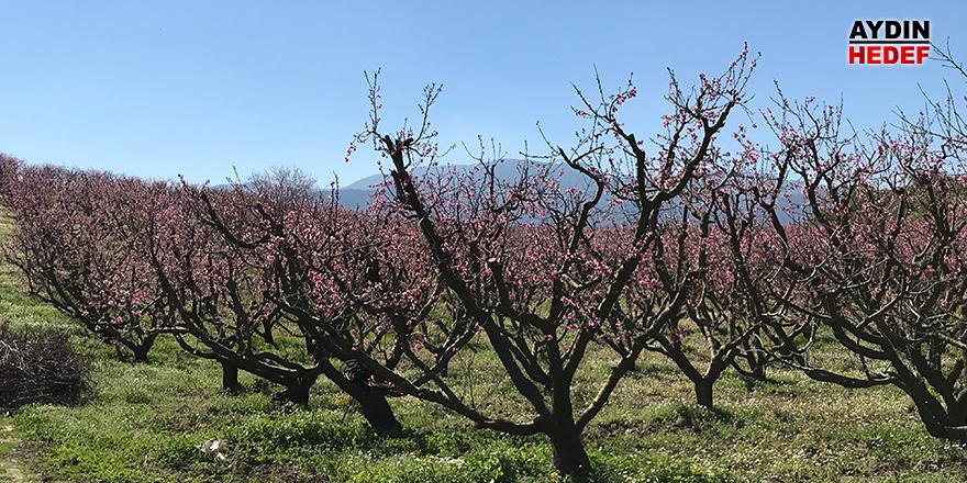 Kuşadası'na bahar geldi