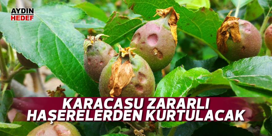 Karacasu zararlı haşerelerden kurtulacak