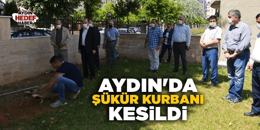 Aydın'da şükür kurbanı kesildi