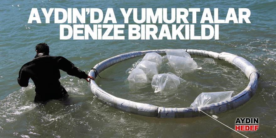 10 milyon balık yumurtası denize bırakıldı