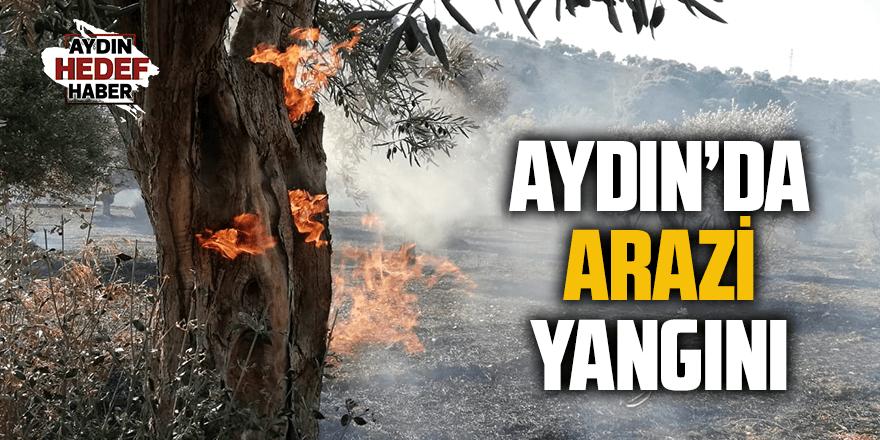 Aydın'da zeytinlik alanda  yangın çıktı