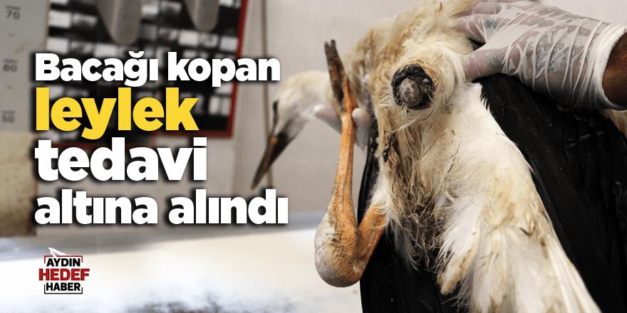 Bacağı kopan leylek tedavi altına alındı