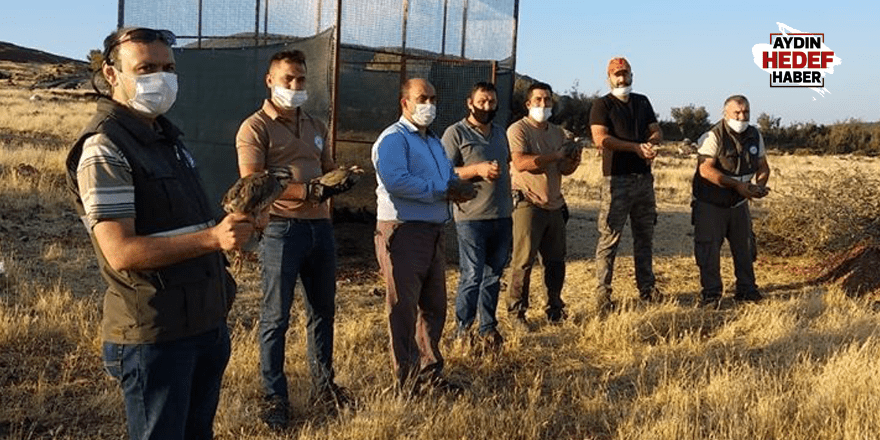 Karacasu'da 350 kınalı keklik doğaya salındı