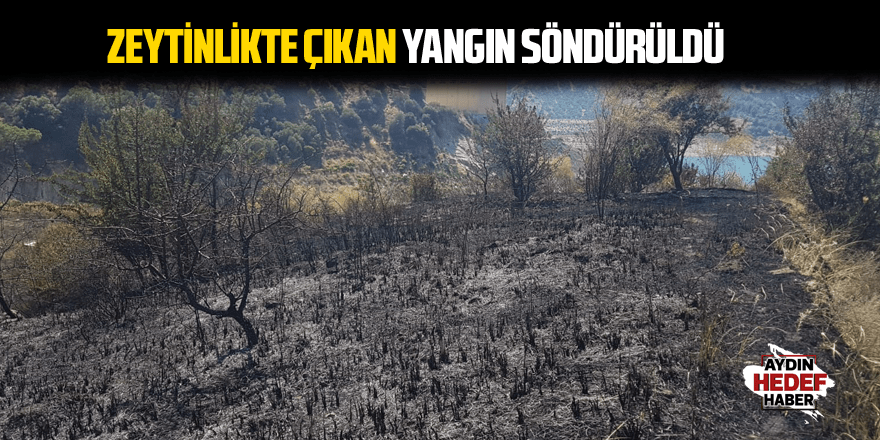 İncirliova'da zeytinlikte çıkan yangın söndürüldü