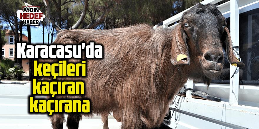 Karacasu'da keçileri kaçıran kaçırana