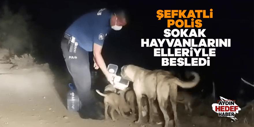 Şefkatli polis sokak hayvanlarını elleriyle besledi