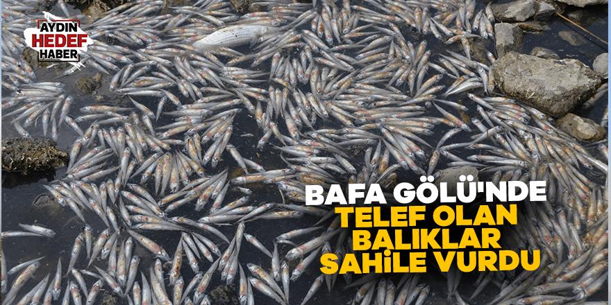 Bafa Gölü'nde telef olan balıklar sahile vurdu