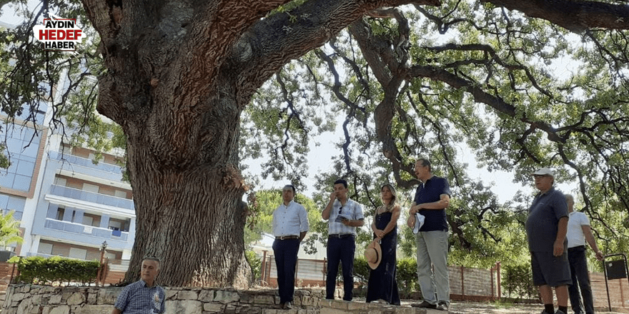 Anıt ağaçlar için turistik rota oluşturulacak