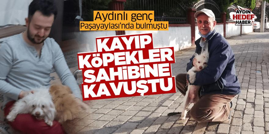 Aydın'da bulunan kayıp köpekler sahibine kavuştu