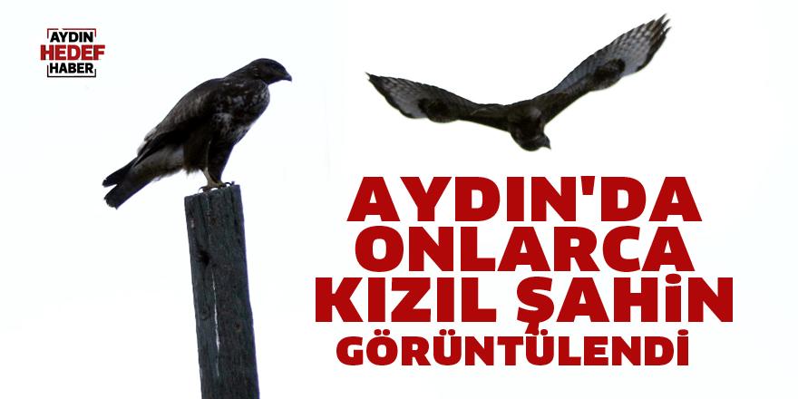 Aydın'da onlarca kızıl şahin görüntülendi