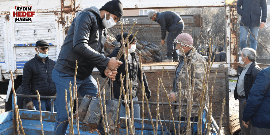 Germencik'te çiftçilere 7 bin adet fidan dağıtıldı