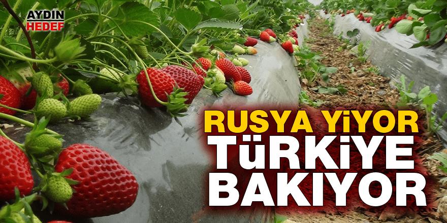 Rusya yiyor, Türkiye bakıyor