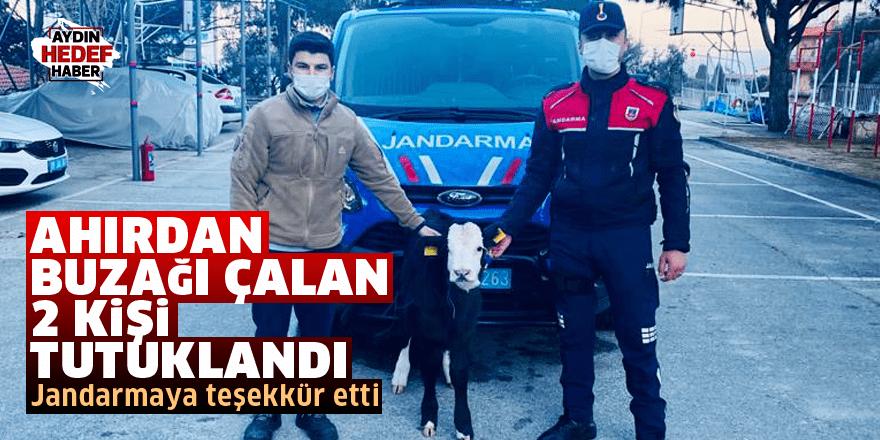 Ahırdan buzağı çalan 2 kişi tutuklandı