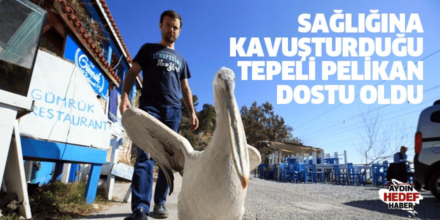 Sağlığına kavuşturduğu tepeli pelikan dostu oldu