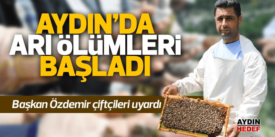 Aydın'da arı ölümleri başladı