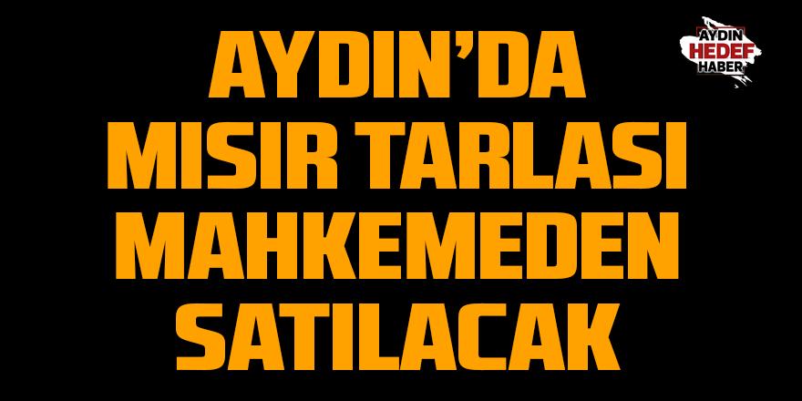 Aydın'da mısır tarlası satılacak