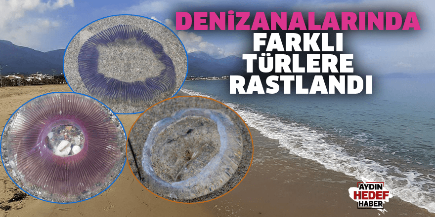 Denizanalarında farklı türlere rastlandı
