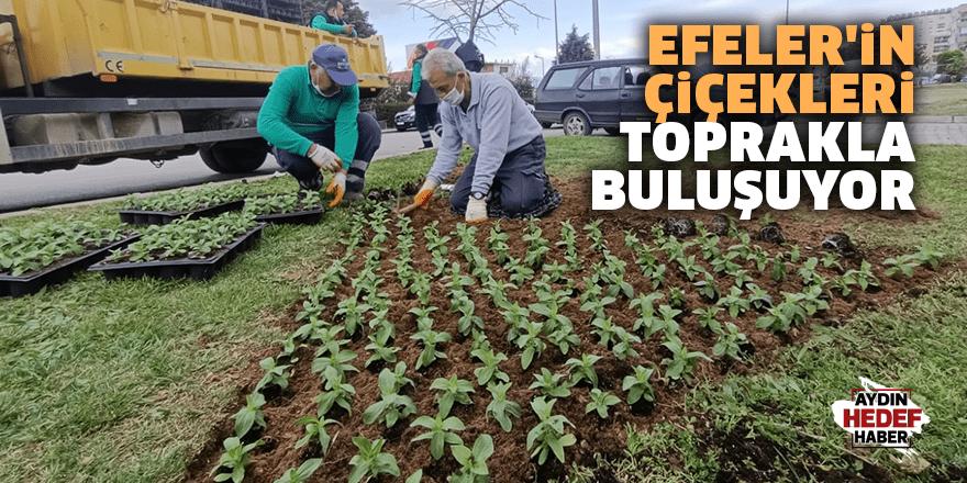 Efeler'in çiçekleri toprakla buluşuyor