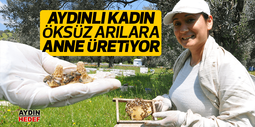 Öksüz arılara anne üretiyor