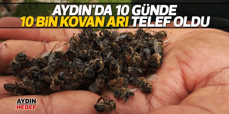 Aydın'da 10 günde 10 bin kovan arı telef oldu