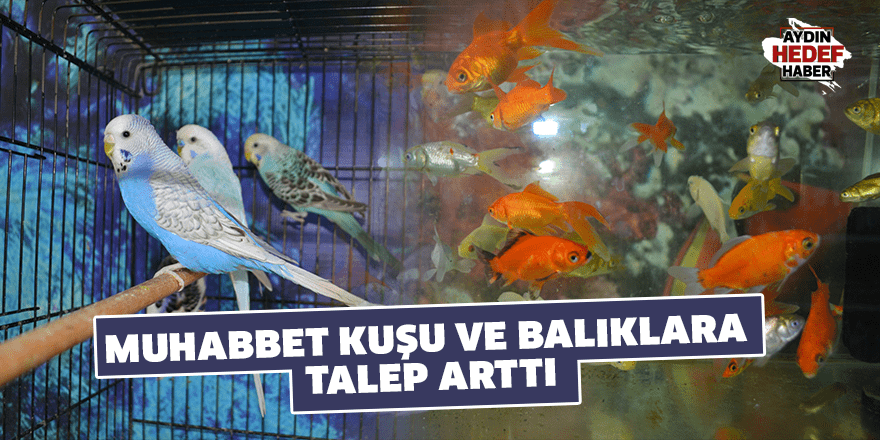 Muhabbet kuşu ve balıklara talep arttı