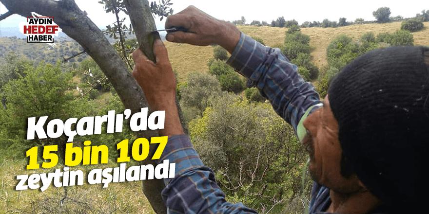 Koçarlı'da 15 bin 107 zeytin aşılandı