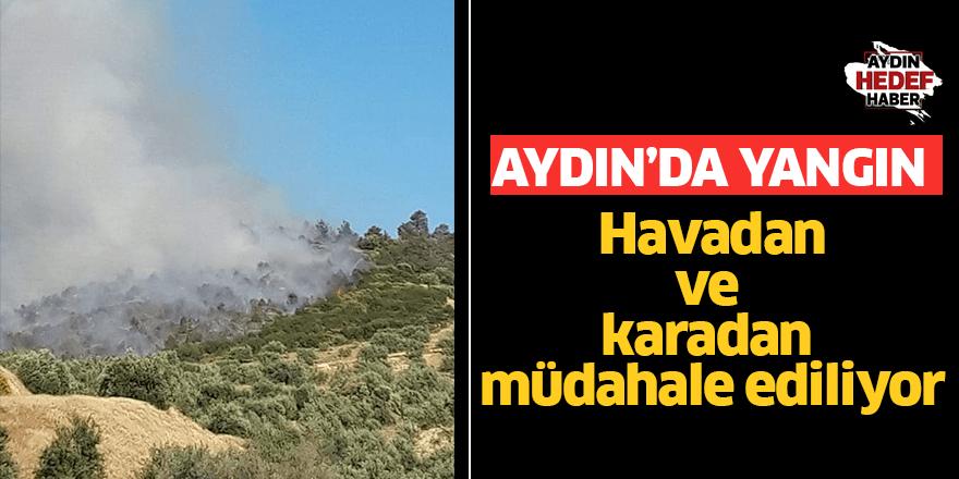 Aydın'da orman yangını! Havadan ve karadan müdahale ediliyor