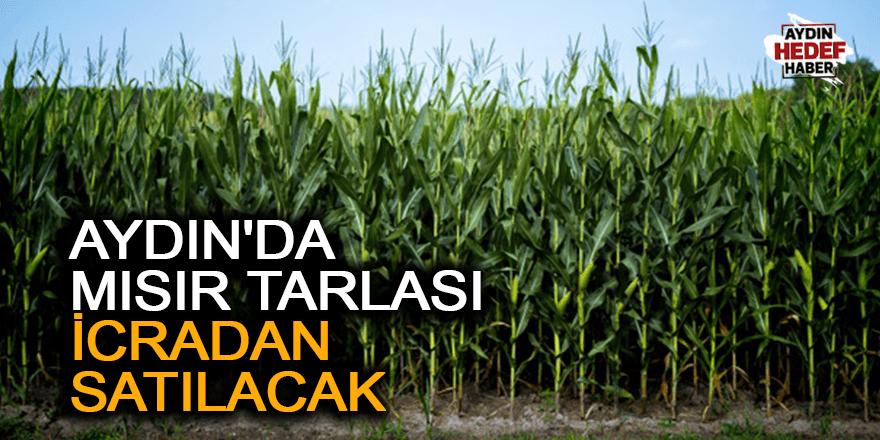 Aydın'da mısır tarlası  icradan satılacak