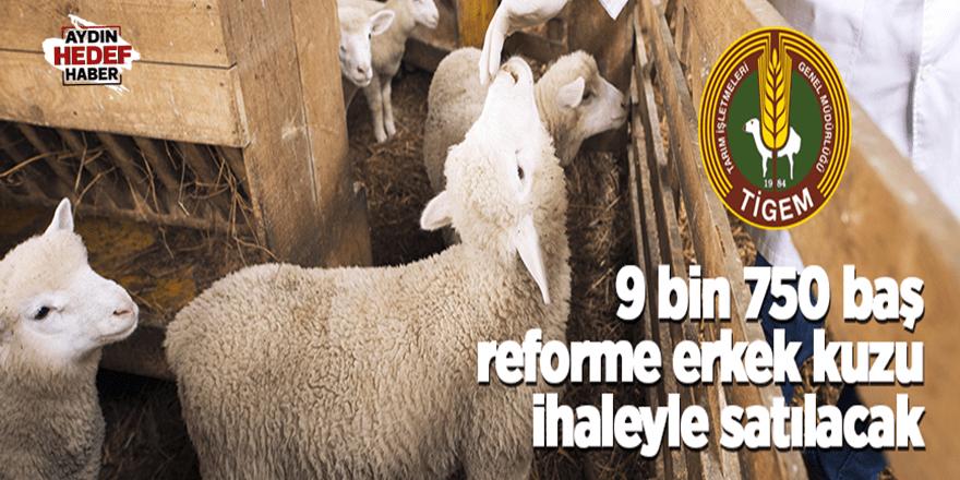 9 bin 750 baş erkek kuzu ihaleyle satılacak