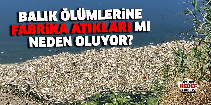 Balık ölümlerine fabrika atıkları mı neden oluyor?