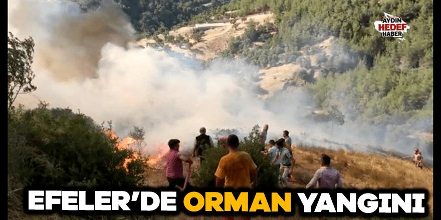 Efeler'de orman yangını