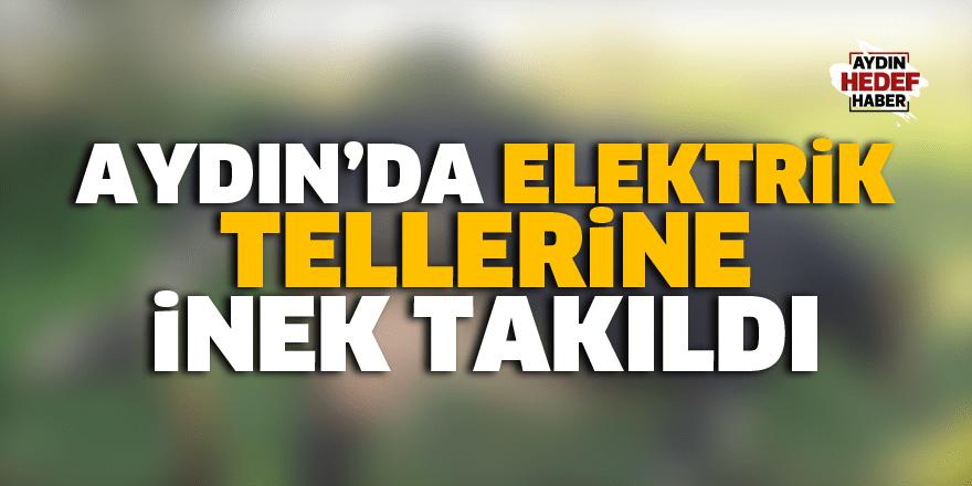 Aydın'da elektrik tellerine inek takıldı