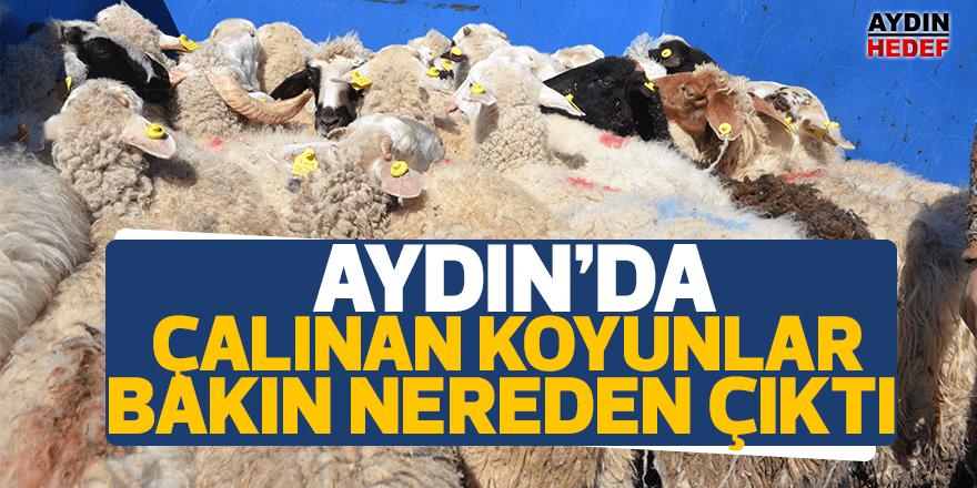 Sultanhisar'da çalınan koyunlar Karacasu'dan çıktı