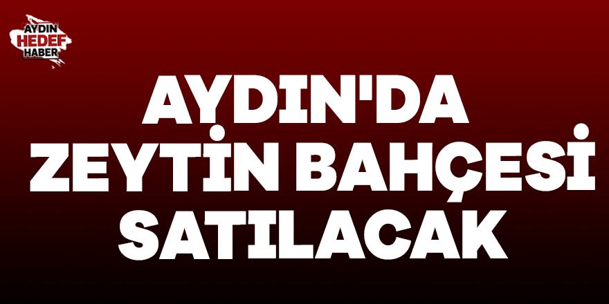 Aydın'da zeytin bahçesi satılacak