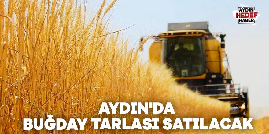 Aydın'da buğday tarlası satılacak