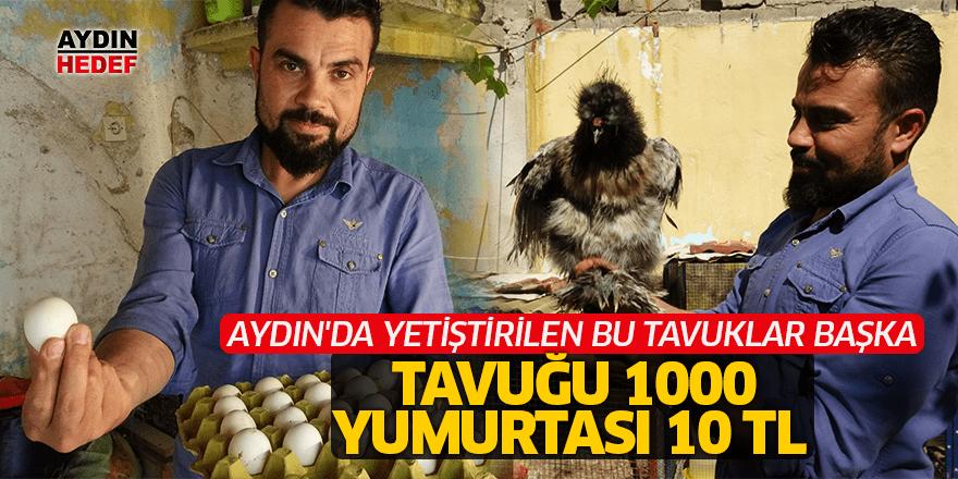 Tavuğu 1000 yumurtası 10 TL
