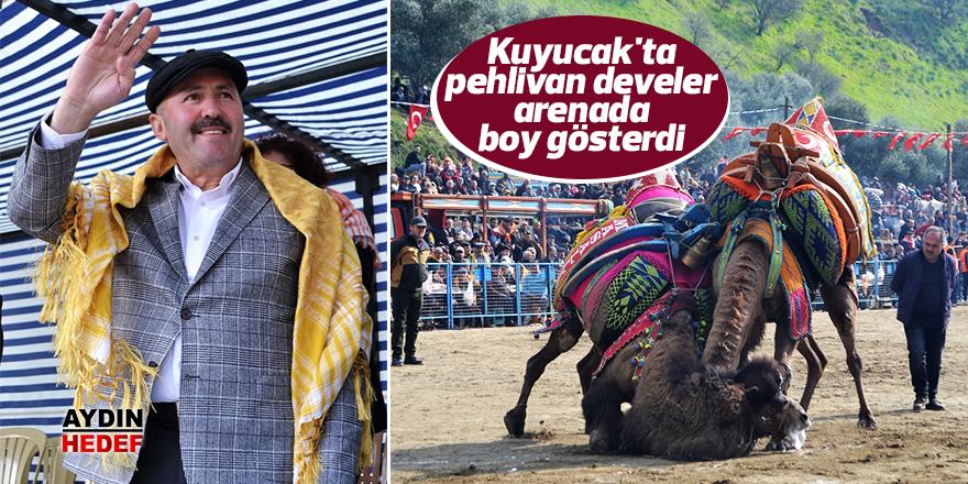Kuyucak'ta pehlivan develer arenada boy gösterdi