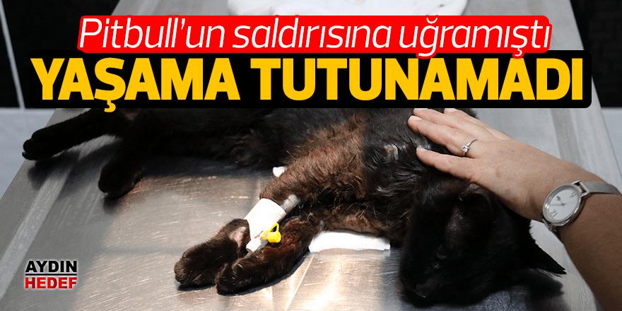 Pitbull'un yaraladığı kedi öldü