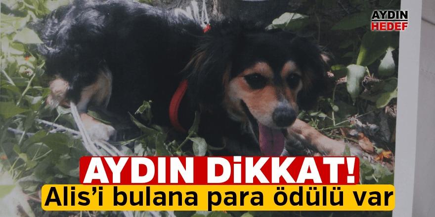 Köpeğini bulana bin lira ödül verecek