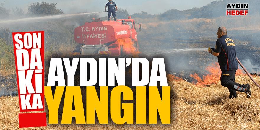 Didim'de zeytinlik yangını