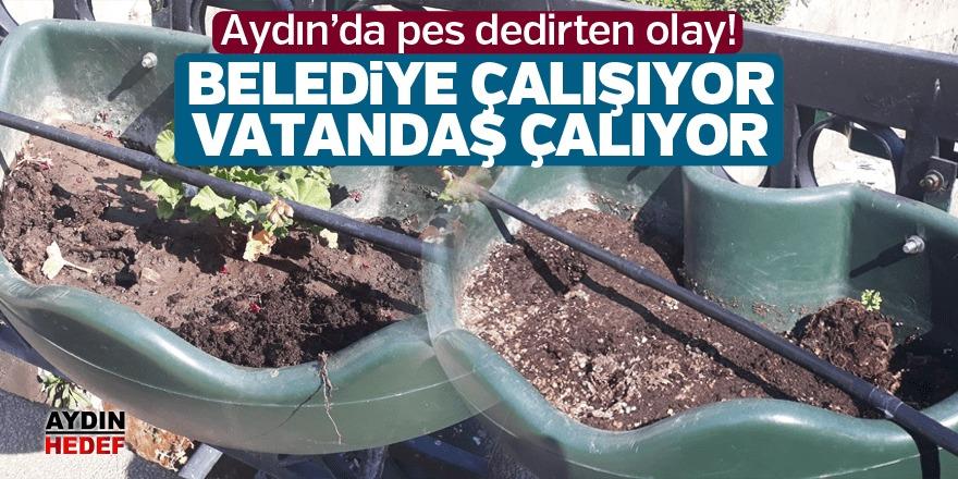 Aydın'da çiçek hırsızlığı