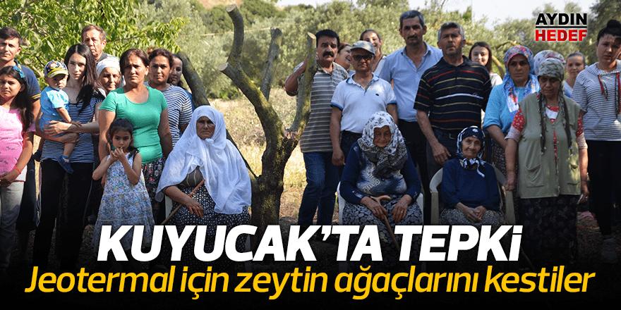 Aydın'da zeytin ağaçlarının kesilmesine tepki